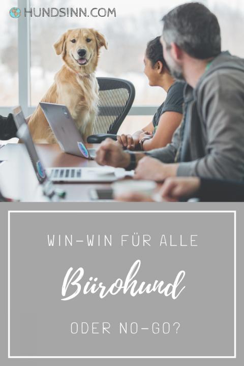 Ein Hund im Büro!? Win-win für Hund & Herrchen – und den Arbeitgeber