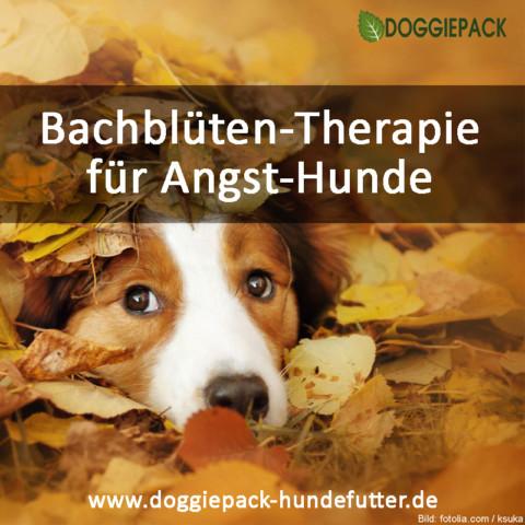 Bachblüten für Hunde: Teil 2: Angst