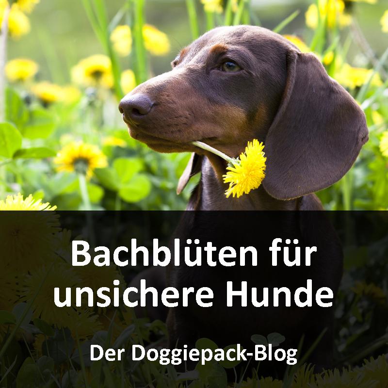 Bachblüten für unsichere Hunde