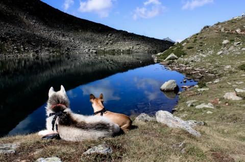 Baden mit Hund in Tirol? Bei diesen 22 Seen sind Hunde willkommen!