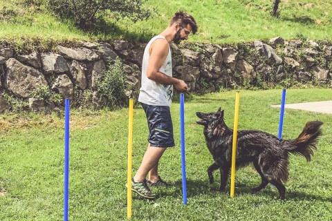 5 Spiele, bei denen dein Hund nicht überdreht: Unsere Balljunkie-Alternativen