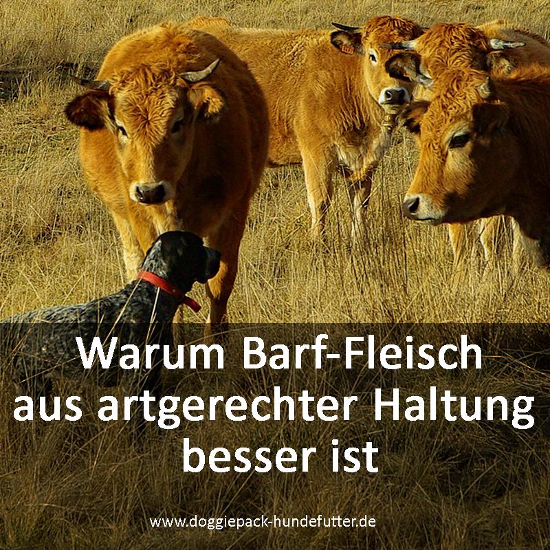 barf-fleisch-aus-artgerechter-haltung