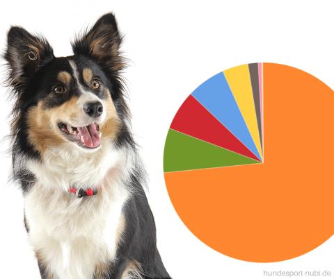 Die beliebtesten Hundesportarten Deutschlands – früher und heute