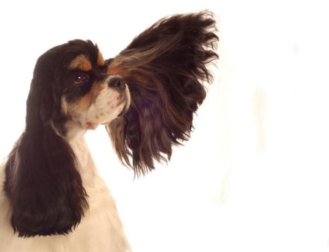 Belltypen der Hunde