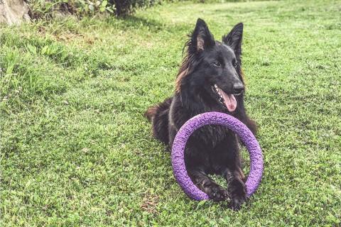 Hunde kreativ belohnen –Hilfe, mein Hund mag keine Leckerlis