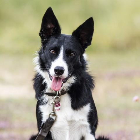 10 Gründe, warum Eure Hunde die Normandie lieben werden!