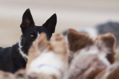 Notfalllexikon Französisch für Hundeurlauber