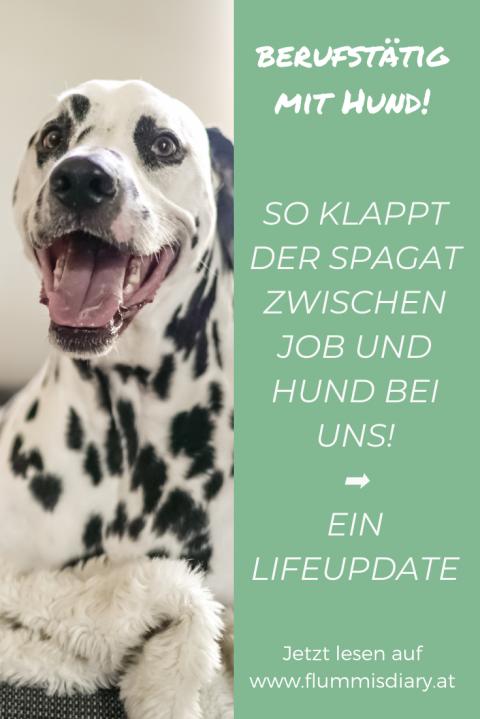 Berufstätig & Hund? Wie das funktioniert und alle Tipps – jetzt am Blog! Inkl. Wochenübersicht