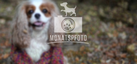 Monatspfoto September – Hallo Herbst!