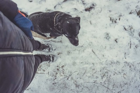 Hunde-Bindung auf einem neuen Level: Mit dieser Übung leicht gemacht!