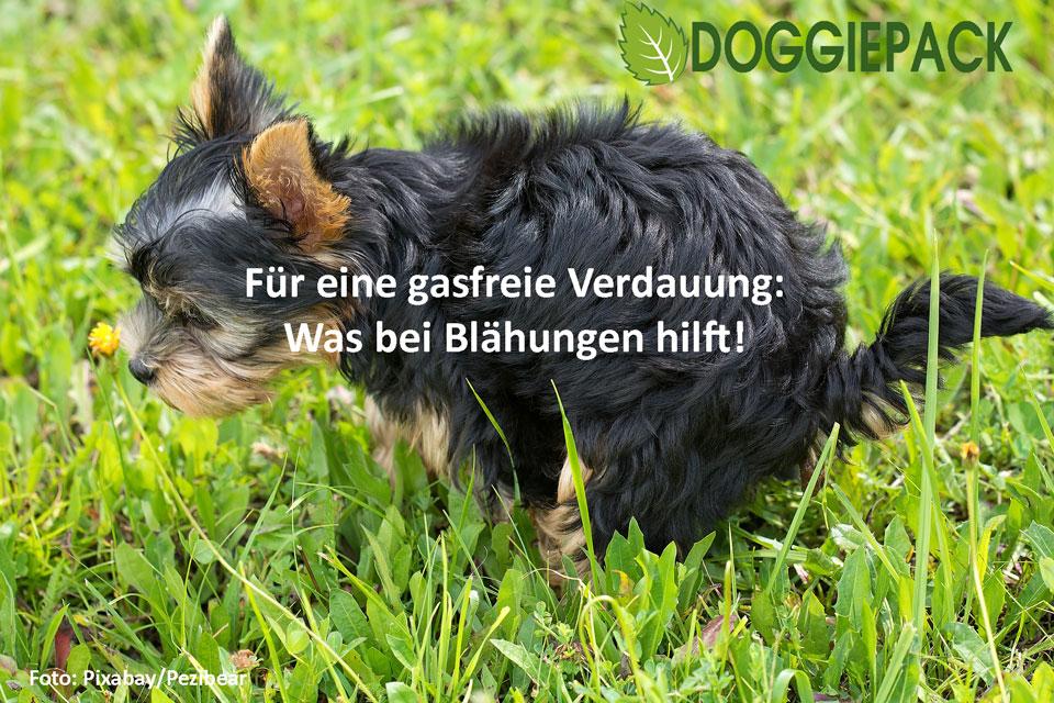 blaehungen_hund_ratgeber_doggiepack