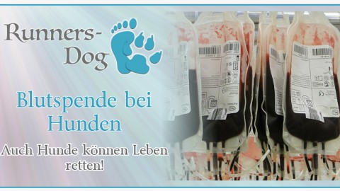 Blutspende bei Hunden – Auch Hunde können Leben retten!