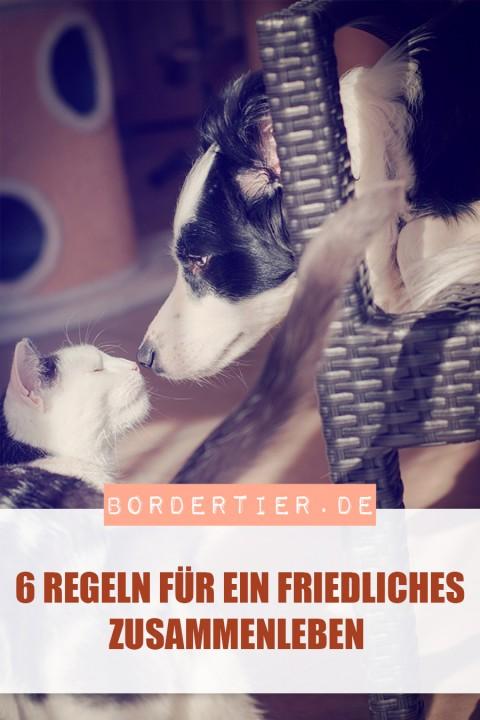 Hund&Katz: 6 Regeln für ein friedliches Miteinander