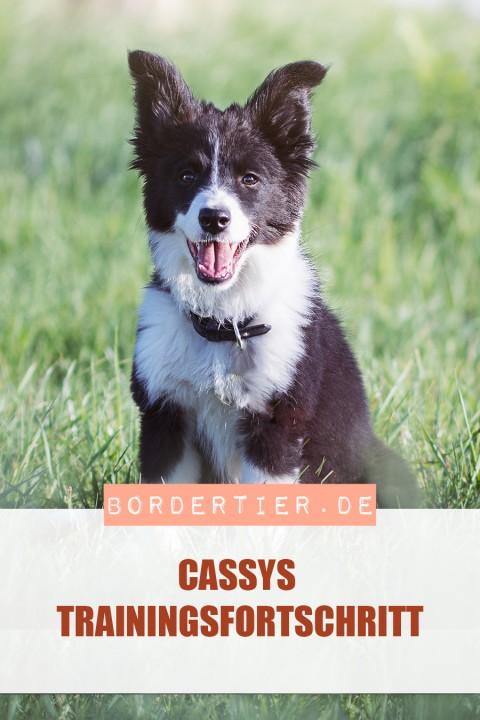 Cassys Trainingsfortschritte
