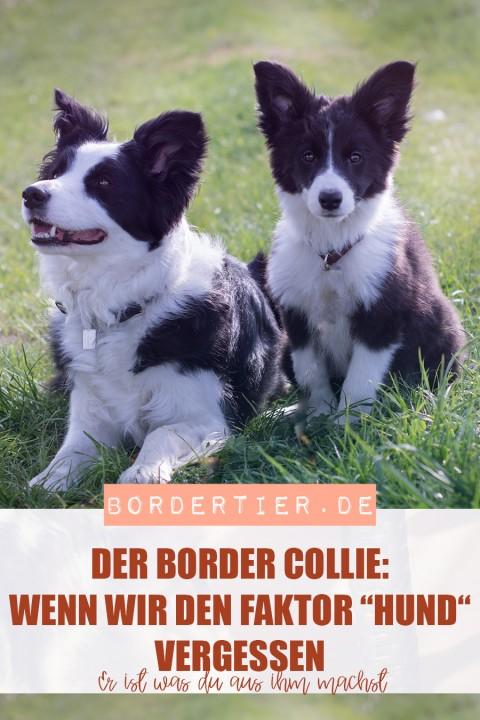 """Border Collie: Wenn wir den Faktor """"Hund"""" vergessen. """"Er ist, was du aus ihm machst!"""""""