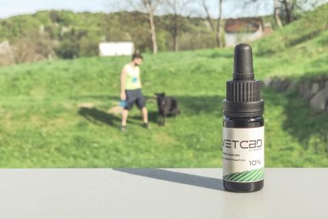 CBD-Öl für den Hund: Erfahrungsbericht über VetCBD
