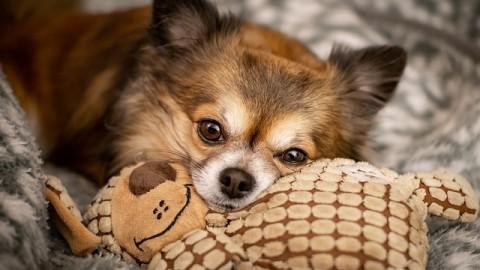 Entspannungsübungen für den Hund