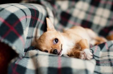 Darf der Hund ins Bett oder auf das Sofa?