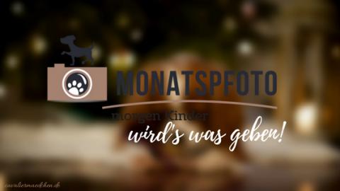 [miDoggy] Monatspfoto Dezember – Morgen Kinder wird's was geben!