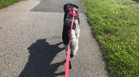 Im Test: curli Hundegeschirr und Leine //Werbung