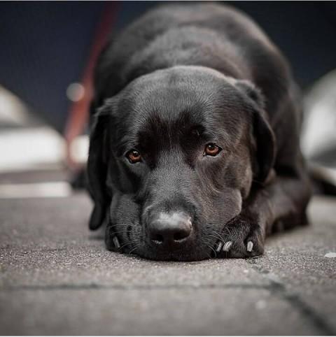 Das Immunsystem des Hundes stärken
