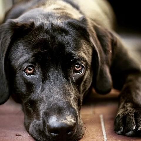 Dein Hund hat Leishmaniose? Keine Panik!