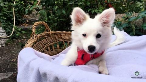 Kind und Hund? | Fragen zum Familienhund!