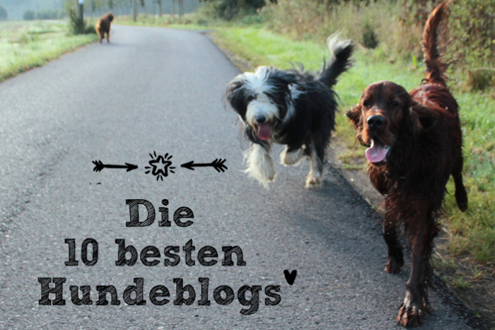 die-10-besten-hundeblogs