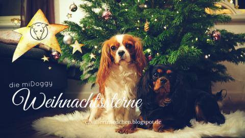 Die miDoggy Weihnachtssterne: Ein guter Grund um Danke zu sagen -1-