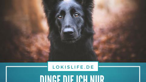 Nur für dich – Blogparade zum Liebe-dein-Haustier-Tag 2020