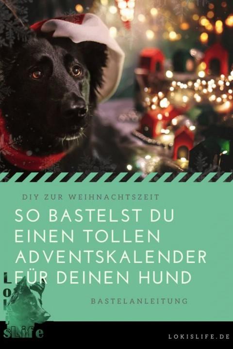 DIY zur Weihnachtszeit: Adventskalender für Hunde | Gewinnspiel