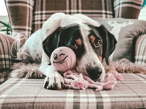 DIY: Einen Kraken aus Fleece als Hundespielzeug basteln