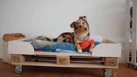 |kreativ| DIY Hundebett