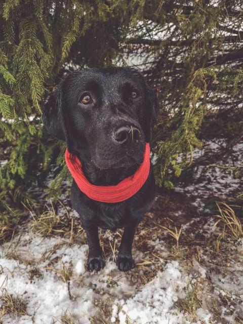 DIY: Stylischer Loop für den Hund ganz einfach selbst gemacht