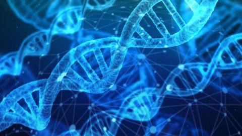 DNA Test für Hunde – wir haben es getan