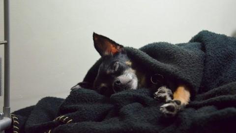 Abschied und Trauer um den Hund