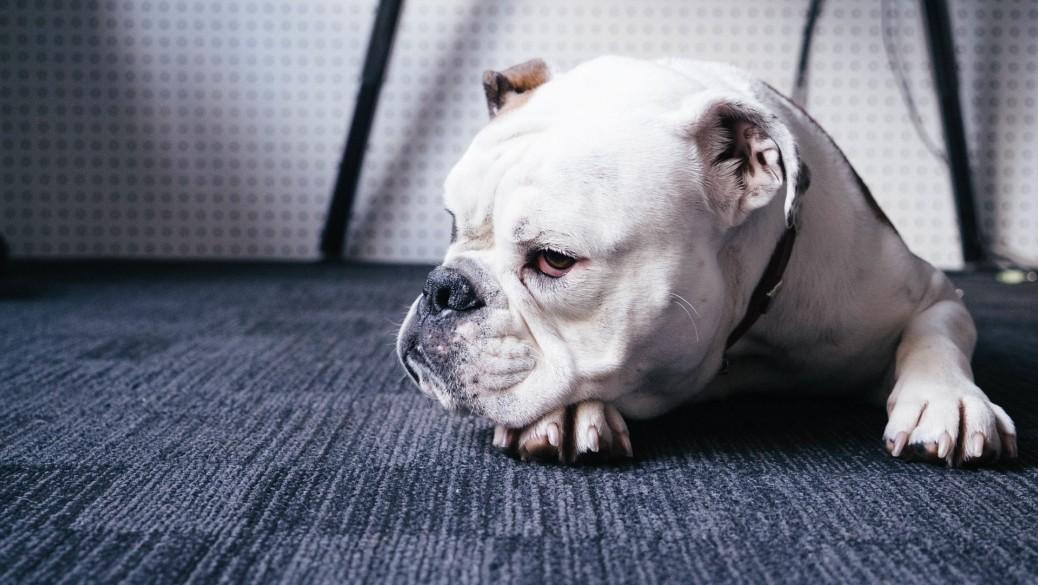 Gelenkprobleme beim Hund vorbeugen