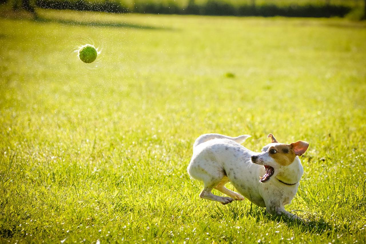 Auslastung Hunde