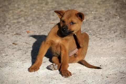 Hilfe! Hat mein Hund Flöhe ? – DIY Flohfalle