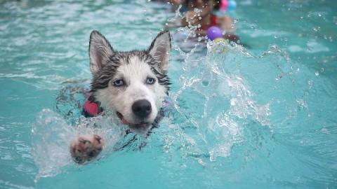 10 tierisch gute Tipps für heiße Tage