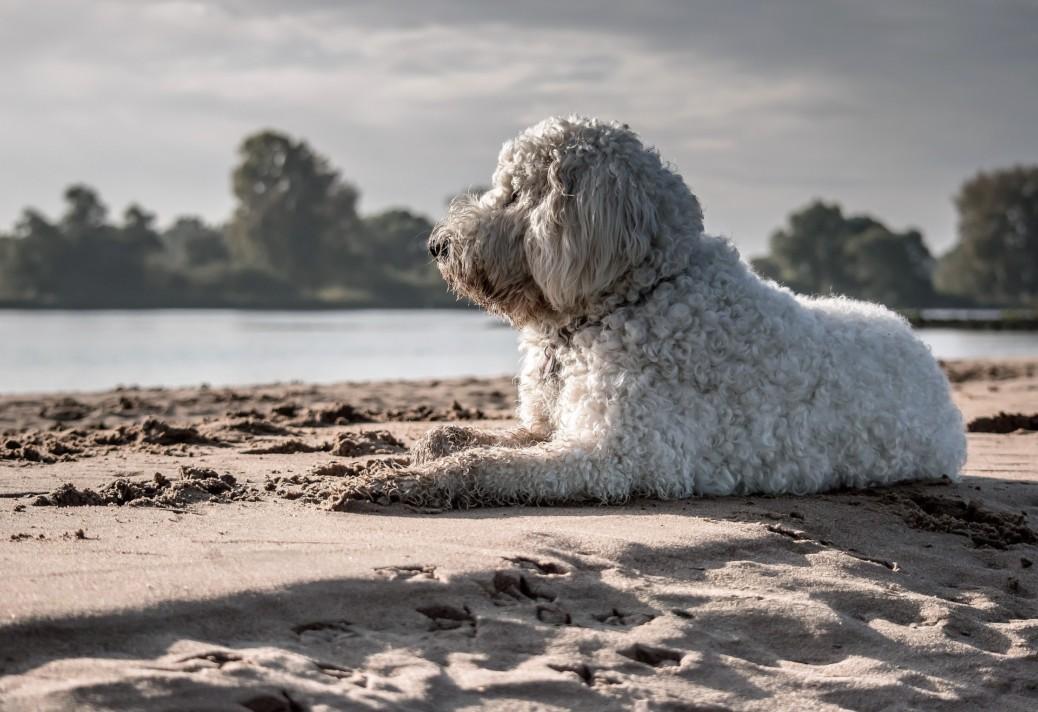Die schönsten Hundestrände Deutschlands