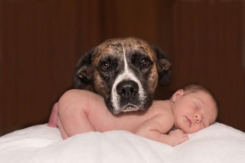 Über Hunde und Kinder