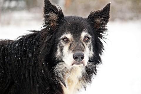 Demenz bei Hunden: Ist mein Hund dement oder einfach nur alt?
