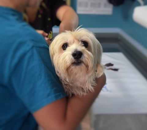 5 Tipps für einen entspannten Tierarztbesuch