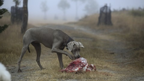 Giftköder – Der Horror für Hundebesitzer