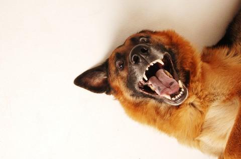 Fleisch und Knochen – Was darf in den Hund?