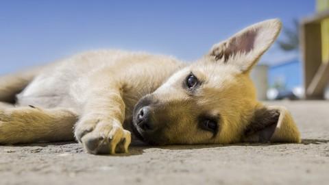 Vergiftungen beim Hund – Das ist zu tun!