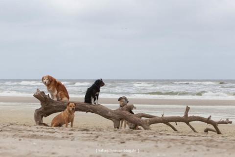Sint Maartenszee: Strandurlaub mit Hund in Nordholland