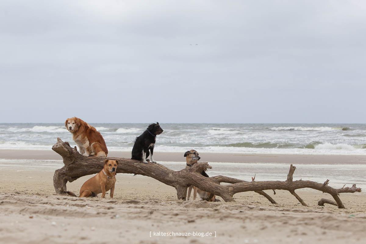 dogfriends petten sint maartenszee mit Hund