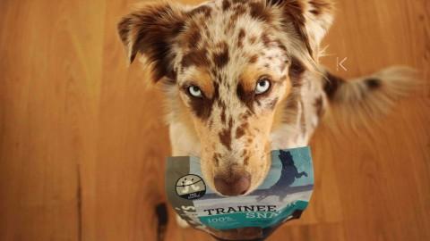 |test| Dr.Clauder's Trainee Snacks in neuen Sorten – mit Gewinnspiel!